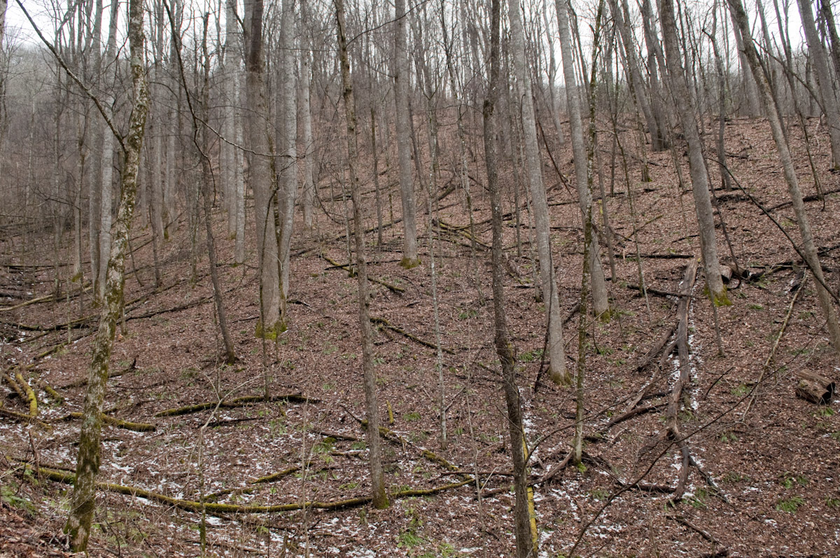 forest-in-winter-newton-bald-january-28-2013